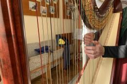 Рідкісний інструмент – арфу – закупили для музичної школи в рамках громадського бюджету