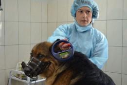 У Житомирі розпочали реалізацію проекту Бюджету участі «Зменшення кількості безпритульних тварин»